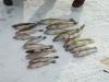 Sweet's Fishing Fish On!